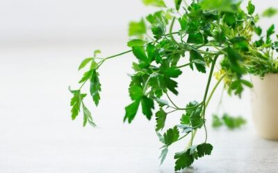 5 Reasons to Windowsill Garden Fresh Herbs
